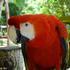 Aves de América del sur icon