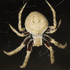 Spiders of Limpopo icon