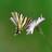 ABIOME : Plantes et animaux sauvages de nos contrées - Wild plants and animals of our regions icon