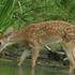 Mammals of Cook County Illinois icon