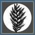 Cedar Watch icon
