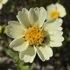 Flora of Ventura County icon