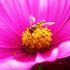 Biodiversiteit van Insecten in de provincie Groningen icon