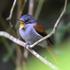 ABIOME : Plantes et animaux sauvages de la Réunion - Wild plants and animals of Reunion Island icon