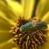 Parks for Pollinators 2020: Cabrillo National Monument icon