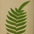 Ferns of South China 華南蕨類 icon