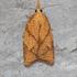 Moths of Ontario icon