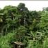 Biodiversity in our home gardens: Sri Lanka icon