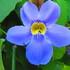 7 Grado Biodiversidad Brader Panamá 2020 icon