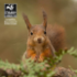 The Red Squirrel Project icon