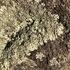 Gettysburg Lichens icon