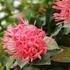 BCS: Plantas ornamentales y exóticas icon