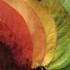 September 2020 KUNHM BioBlitz icon