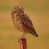 South Dakota Birds icon