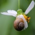 Land snails of South China 華南陸貝 icon