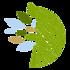 Esquenta para o BioBlitz - BioTiba icon