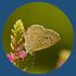 Monitoring Butterflies in Gujarat icon