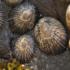 Intertidal of Hawaiʻi icon
