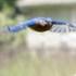 Bluebird Nesting Box Detection icon