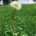 Flora: Malezas/Arvenses/Ruderales, del Valle de Aburrá icon