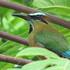 Biodiversidad del Centro Ecoturístico Kiichpam K'áax icon