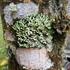 Fungi Including Lichens of Peru icon