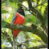 Aves de Nuevo León icon