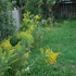 Nature of my yard icon