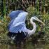 Birds of Big Sur, Carmel, Pebble Beach, Monterey, Pacific Grove, California, USA icon