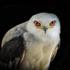 Aves Rapaces de Chile icon