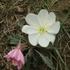 North Dakota Plant Biodiversity icon