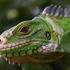 Caribbean Biodiversity icon