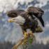 KUNHM Bird Blitz icon