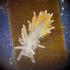 Моллюски Карелии icon