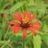 Flora de La Piedad, Michoacán icon