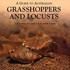 Australian grasshoppers not featured in A Guide to Australian Grasshoppers and Locusts icon