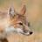 Mammals of Texas icon