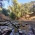 Arboles Protegidos en Áreas de Preservación Ecológica icon