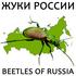 Жуки (Coleoptera) России / Beetles (Coleoptera) of Russia icon