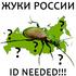 Жуки (Coleoptera) России. Need ID icon