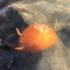 ARC Marine Biology Point Reyes icon