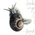Invertebrates of 20 Hillary Street, Dunedin icon