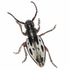 Finnish entomological expedition in Macedonia 13-26.5.2018 icon