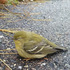 Downed Birds of UVM icon